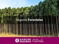 Seguro Forestales