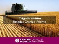 Seguro Trigo Premium